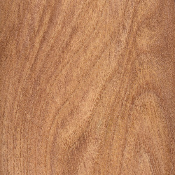 english-elm-sealed-s